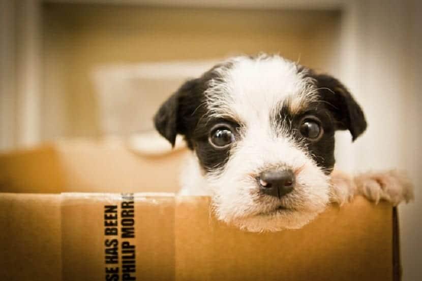 alquilar perros es un negocio legal