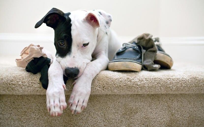 causas comportamiento perros
