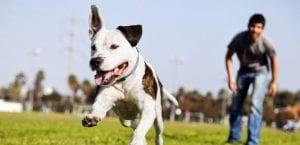 Perro jugando en el campo.