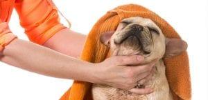 Perro en un spa.