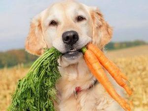 malos habitos en perros