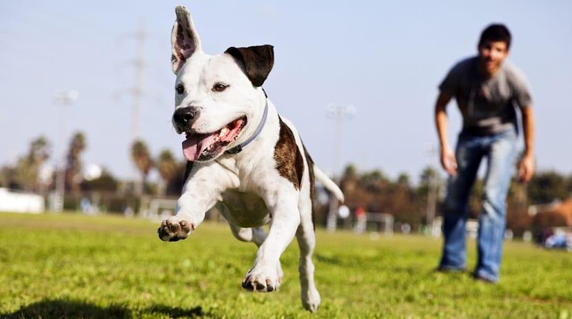 la moda de alquilar perros