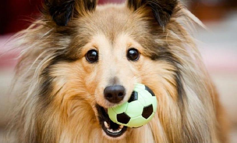 beneficios jugar perro