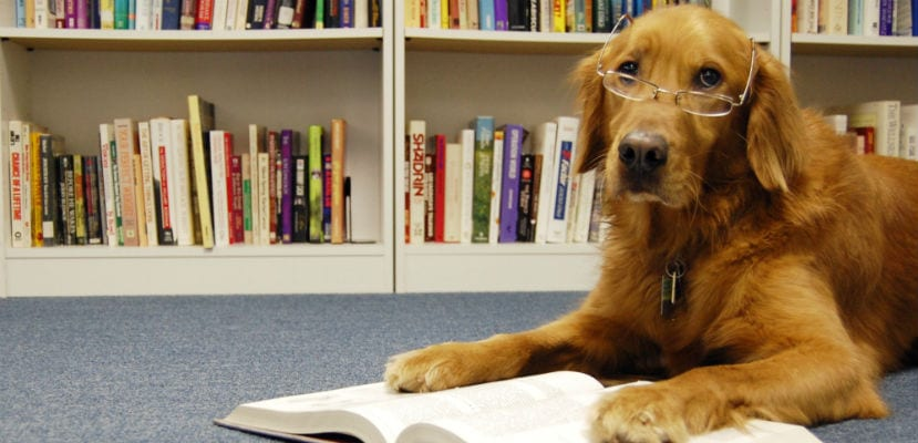 Perro con libros.