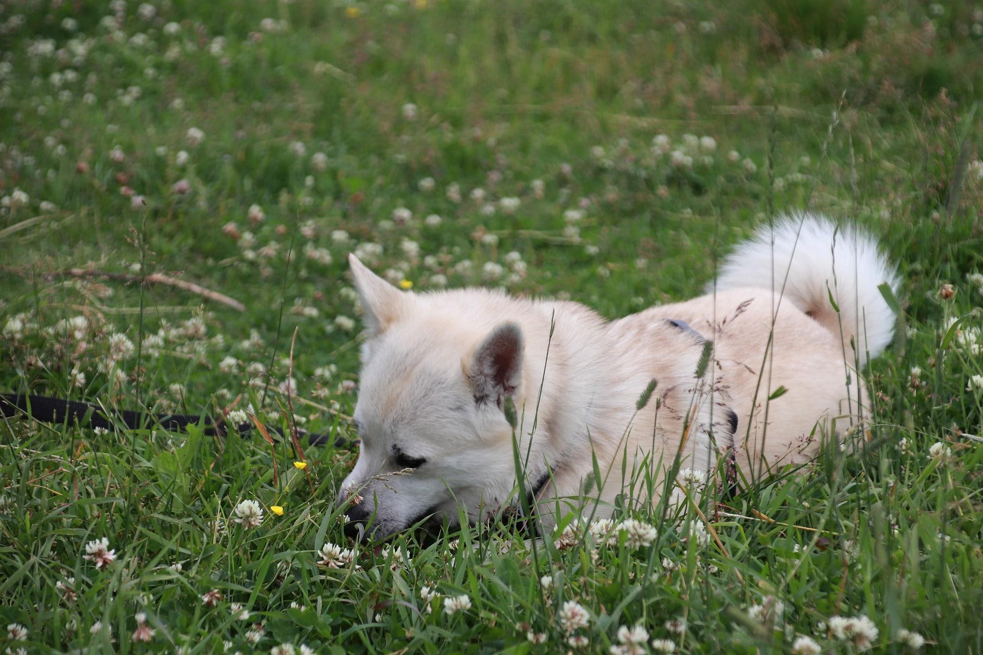 Los bultos en el perro no siempre son benignos