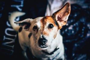 Perro sordo