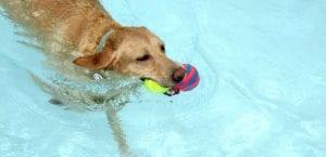 Perro nadando en el agua.