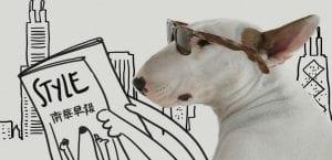 Jimmy Choo, el Bull Terrier del ilustrador Rafael Mantesso.