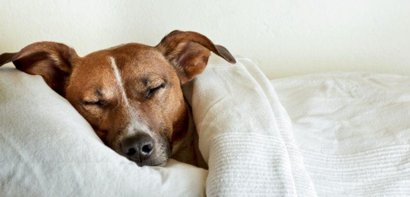 Perro durmiendo en una cama.