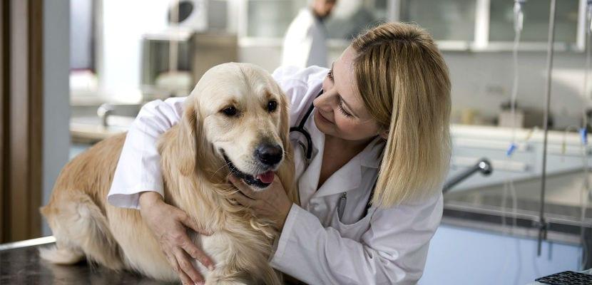 Perro con una veterinaria.