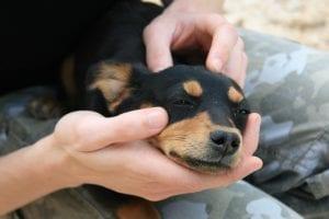Cachorro con humano