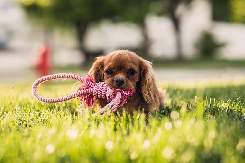 jugar con tu cachorro es importante