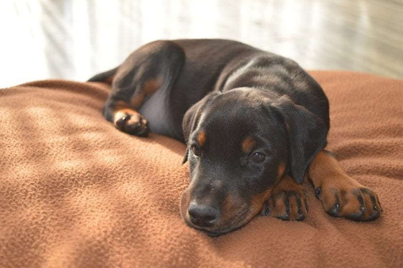 Cachorro joven triste