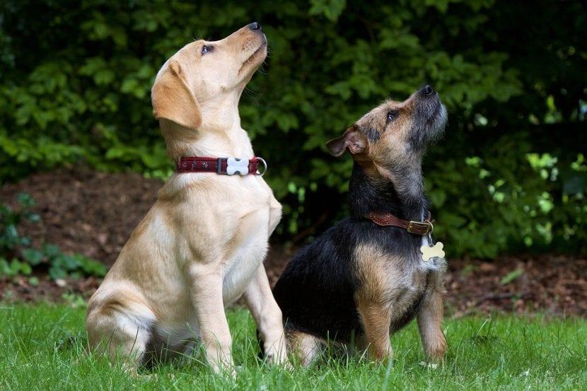 Dos cachorros de perro sentados