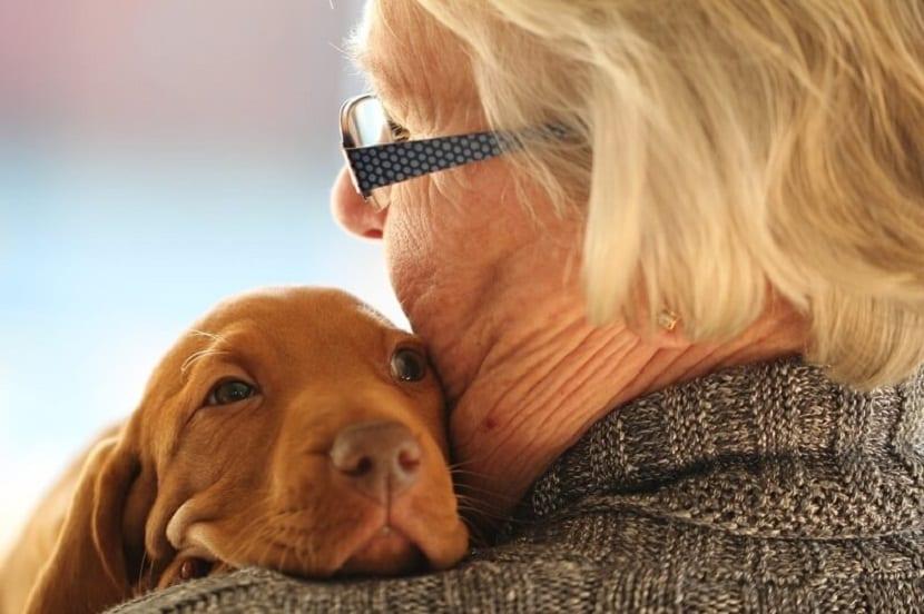 la importancia de hablar con tu mascota