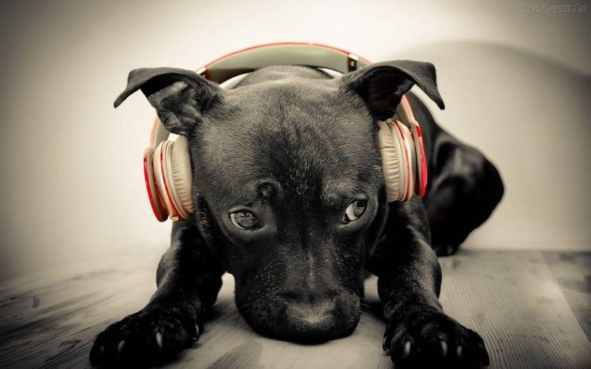 el ruido para los perros