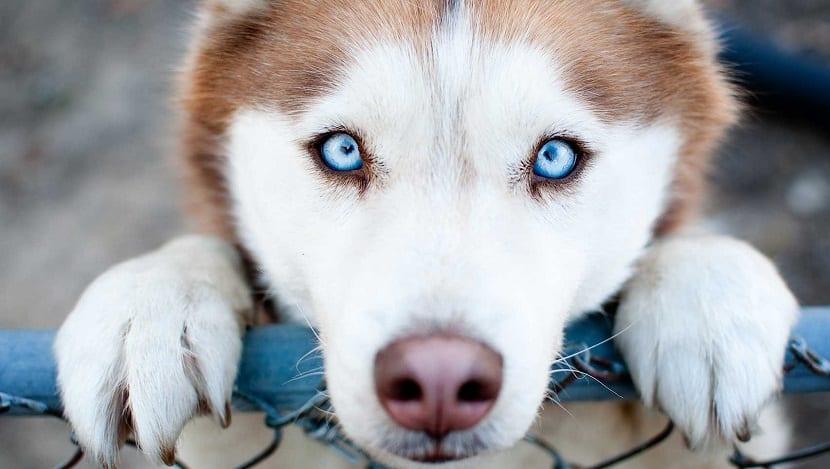 culpabilidad por parte del perro