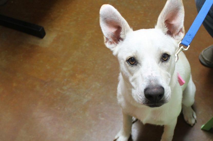 Perro sentado en la clínica veterinaria