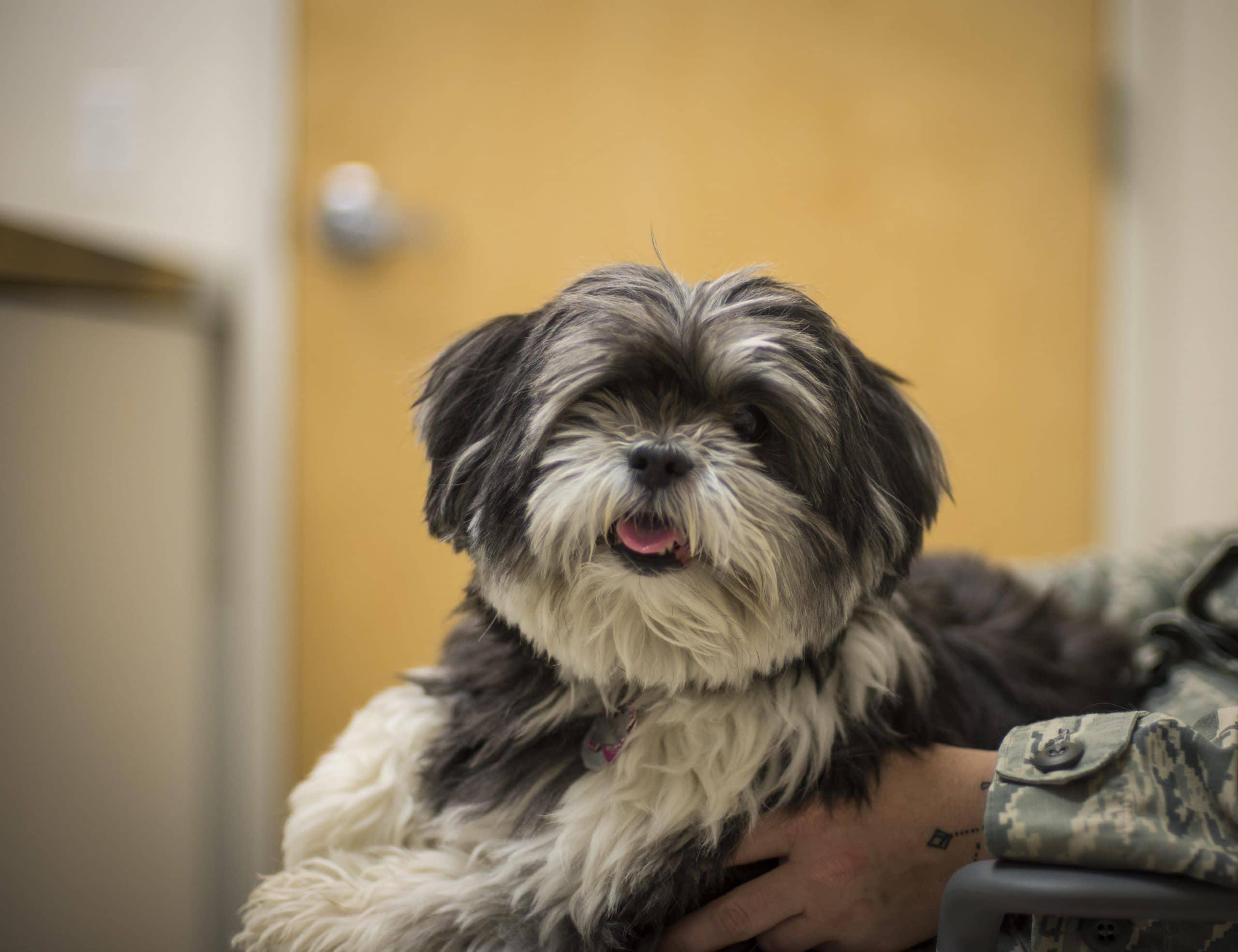 Rasa Ingin Tahu Mundo Perros Dunia Anjing Halaman 3