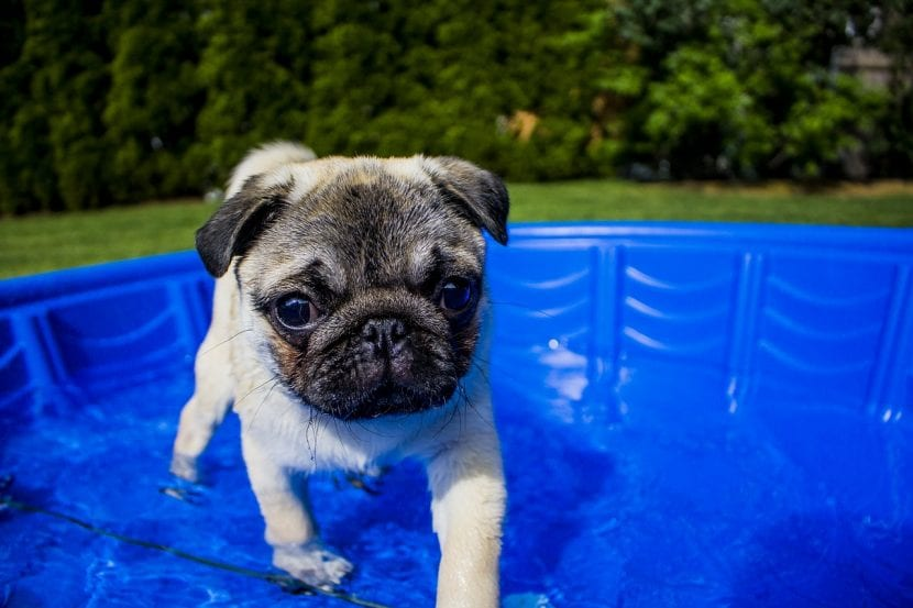 Perro en una piscina