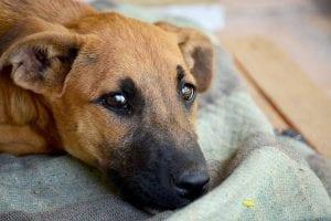 Protege del frío a tu perro para que se recupere del resfriado