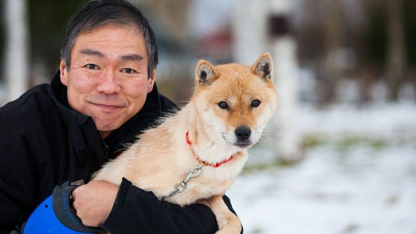 Perro Hokkaido adulto
