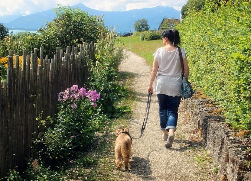 perro paseando sin tirar de la correa
