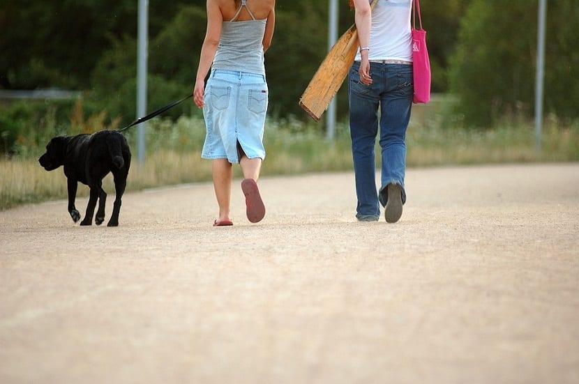 consejos para que el perro no tire de la correa