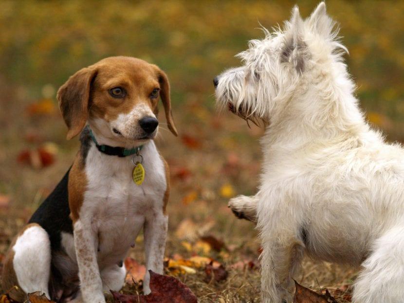 Dos perros en un parque