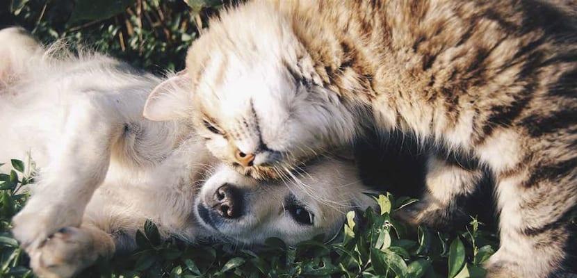 Socializar al cachorro