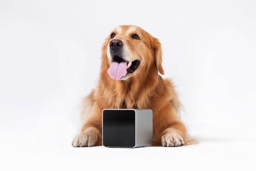 tecnologia para mascotas
