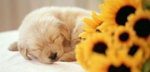 Cachorro durmiendo.