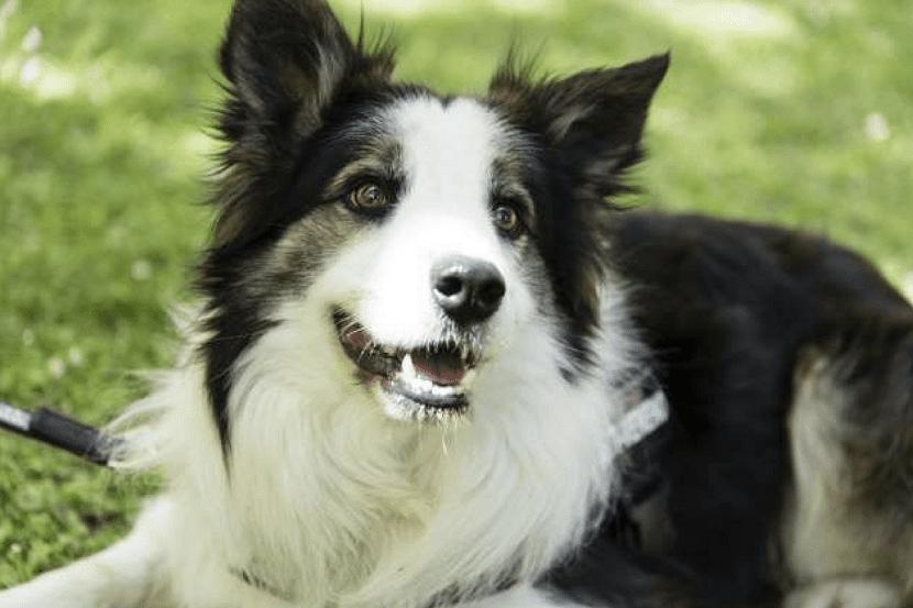 albatrox, el perro zaragozano