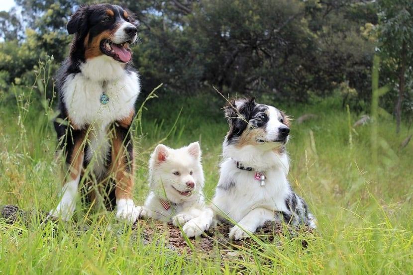 encopntrar la pareja ideal para tu perro