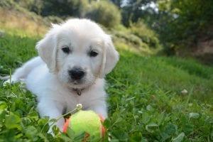 Cachorro con juguete