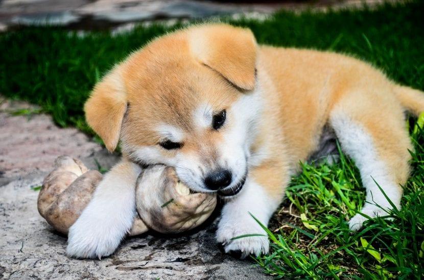 Cachorro con un hueso