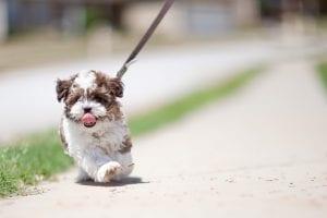 Cachorro paseando con correa