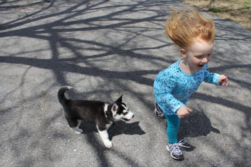 Cachorro y niño