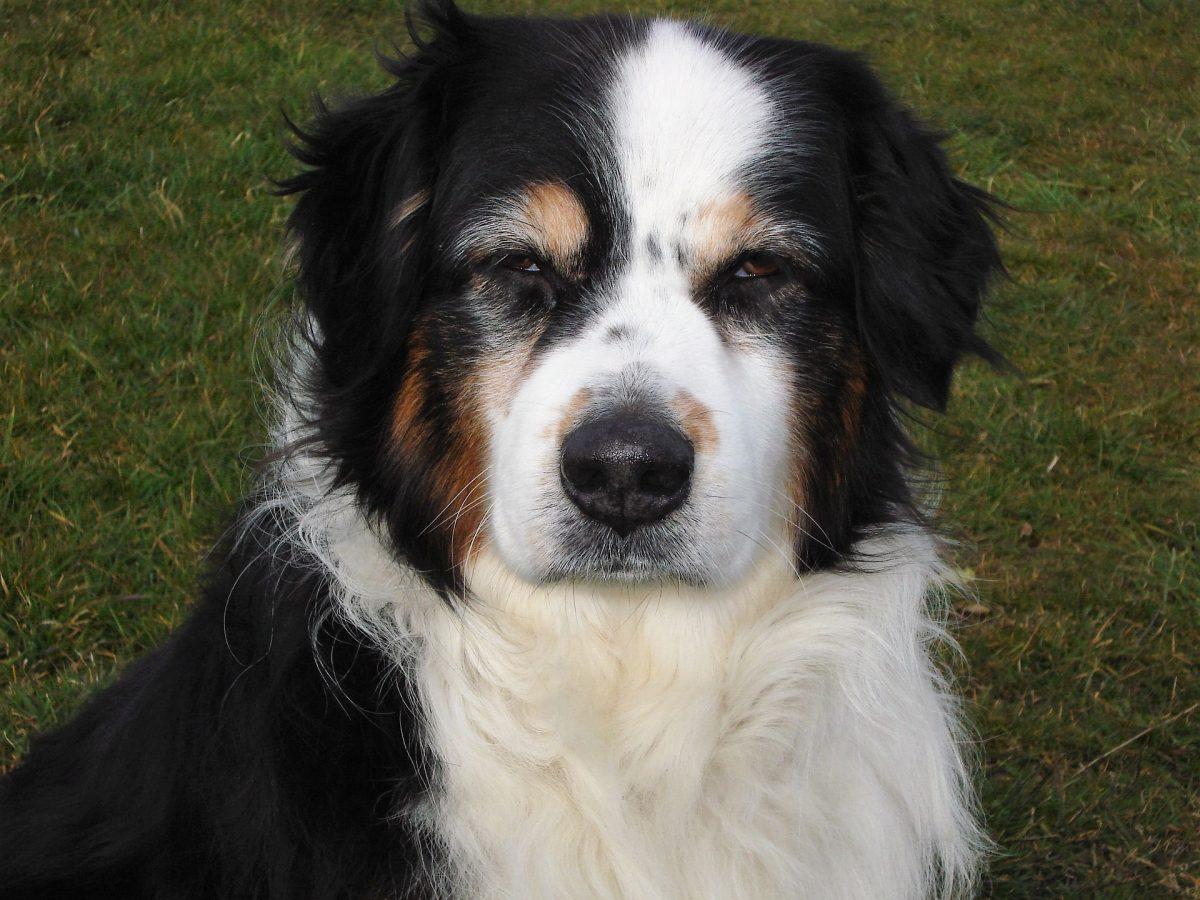 Puedes castrar a tu perra hasta cierta edad