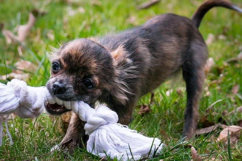 juegos y juguetes para perros