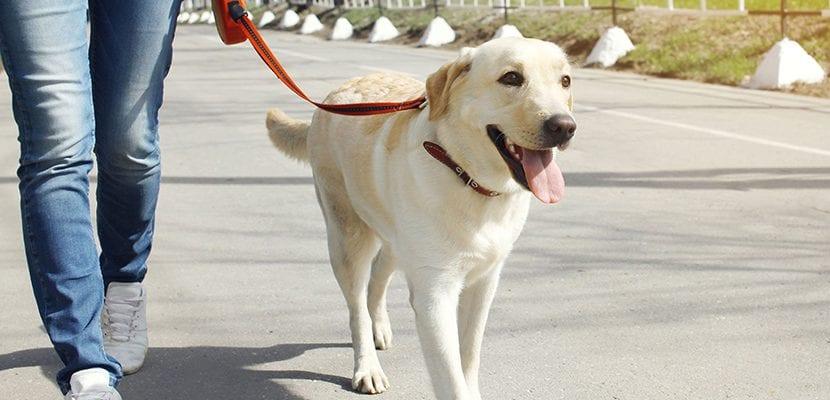 Enseña a tu perro a cruzar la calle contigo