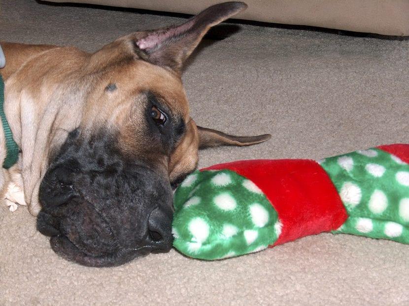 Perro adulto con su juguete