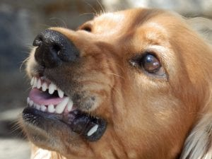 Perro adulto enfadado