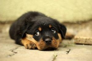 Perro cachorro con miedo