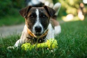 Perro con un juguete en forma de hueso