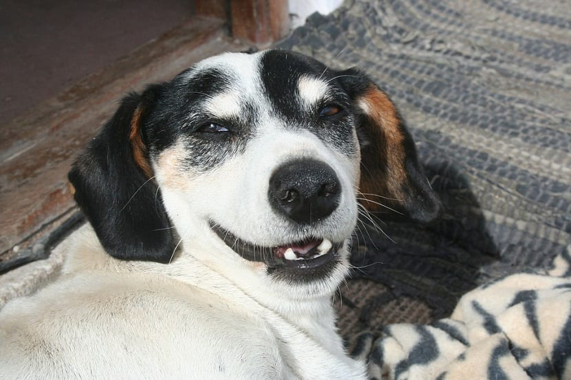 la sonrisa canina