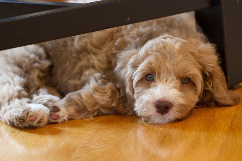 Perro pequeño en un piso