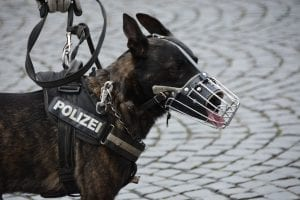 Perro policía con bozal