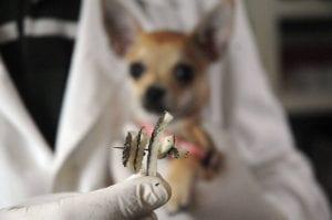 Albatrox detecta trampas para perros