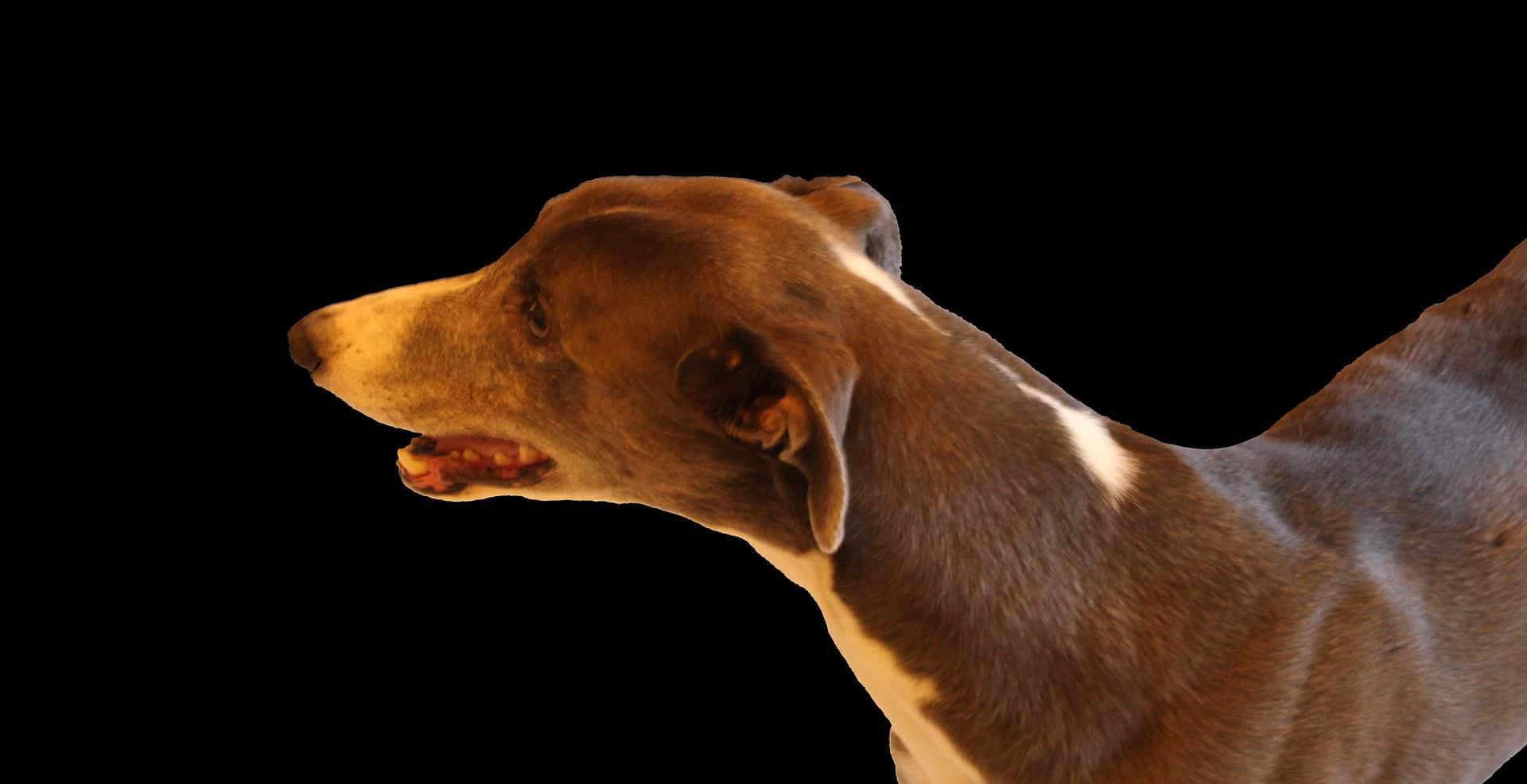 pierderea în greutate canină